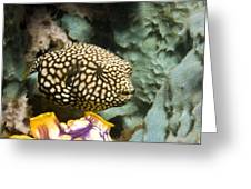 Juvenile Map Pufferfish Greeting Card by Georgette Douwma
