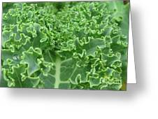 Kale Greeting Card by Tina Marie