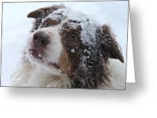 Keepstone Snows Greeting Card by Heather Jett