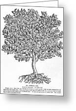 Kermes Oak Tree Greeting Card by Granger