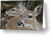 Key Deer Florida Greeting Card by Valia Bradshaw