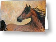 Kiger Mustang Greeting Card by Ben Kiger