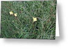 Kiiroi Hana Greeting Card by George Pedro