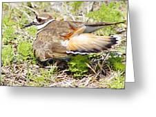 Killdeer Broken Wing Act Greeting Card by Lynda Dawson-Youngclaus