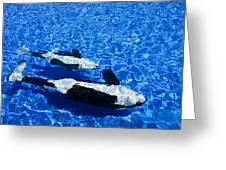 Killer Whales Greeting Card by Dave Fleetham - Printscapes
