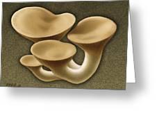 King Oyster Mushrooms Greeting Card by Marshall Robinson