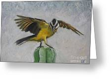 Kiskadee On Cactus Greeting Card by Judith Zur