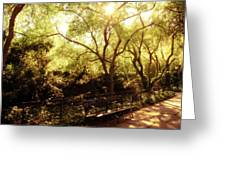 Kissed By The Sun - Central Park - New York City Greeting Card by Vivienne Gucwa
