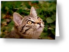 Kitty Eyes 2 Greeting Card by Cindy Wright