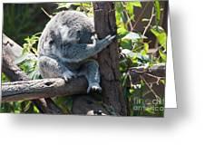 Koala Greeting Card by Carol Ailles