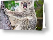 Koala  Greeting Card by Johan Larson