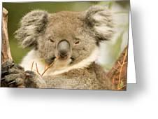 Koala Snack Greeting Card by Mike  Dawson