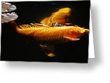 Koi Crossing Greeting Card by Don Mann