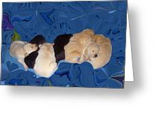 Lab Pups 1 Greeting Card by Aimee L Maher Photography and Art