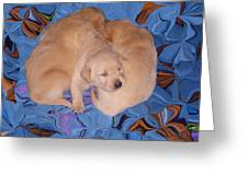 Lab Pups 2 Greeting Card by Aimee L Maher Photography and Art