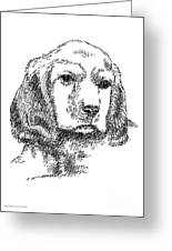 Labrador-portrait-drawing Greeting Card by Gordon Punt