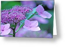 Lace Greeting Card by Becky Lodes