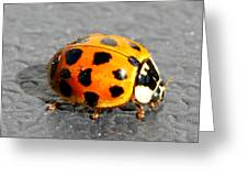 Ladybug In The Sun Greeting Card by Mark J Seefeldt