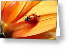 Ladybug On Orange Yellow Dahlia . 7d14686 Greeting Card by Wingsdomain Art and Photography