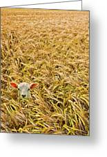 Lamb With Barley Greeting Card by Meirion Matthias