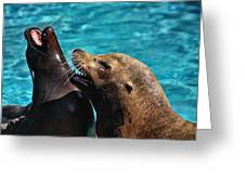 Laughing Seals Greeting Card by Karol  Livote