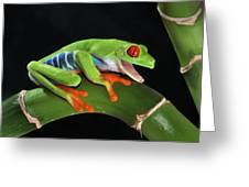 Laughter In The Rainforest Greeting Card by Paul Bratescu