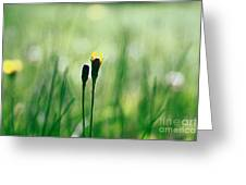 Le Centre De L Attention - Green S0101 Greeting Card by Variance Collections