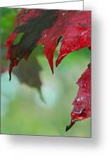 Leaf Shadows Greeting Card by Mandi Howard