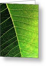 Leaf Texture Greeting Card by Carlos Caetano