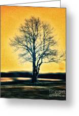 Leafless Tree Greeting Card by Jutta Maria Pusl