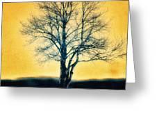 Leafless Tree Greeting Card by Jutta Maria Pusl