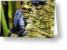 Leap Frog Greeting Card by JC Findley