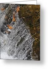 Leaves In The Water Greeting Card by Denise Ellis