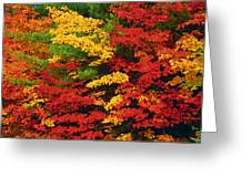 Leaves On Trees Changing Colour Greeting Card by Mike Grandmailson