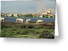 Les Saintes Marie De La Mer. Camargue. Provence. Greeting Card by Bernard Jaubert