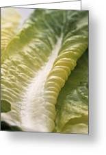 Lettuce Leaf Greeting Card by Sheila Terry