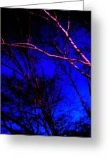 Light On Branches Greeting Card by Allen n Lehman