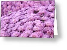 Lilac Frost Greeting Card by Elizabeth Sullivan
