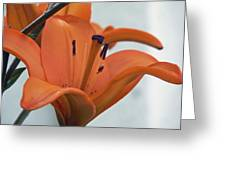 Liliaceae Orange Greeting Card by Pamela Patch