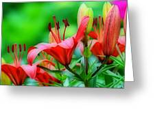 Lilies Ascending Greeting Card by Fraida Gutovich