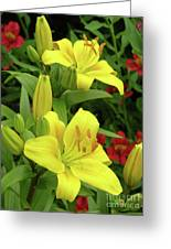 Lilies (lilium 'limelight') Greeting Card by Tony Craddock
