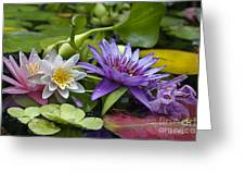 Lilies No. 26 Greeting Card by Anne Klar