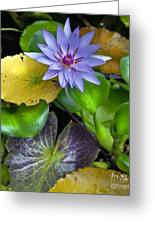 Lilies No. 3 Greeting Card by Anne Klar