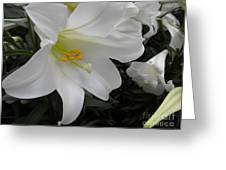 Lilies Greeting Card by Silvie Kendall