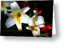 Lilium Longiflorum Flower Greeting Card by Paul Ge