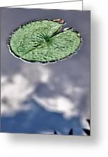 Lily Pad Greeting Card by Robert Ullmann