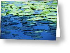 Lily Pads -one Greeting Card by Todd Sherlock