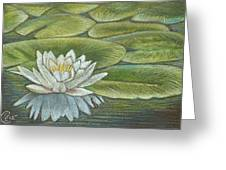 Lily Pads Greeting Card by Stephanie L Carr