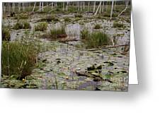 Lilypad Swamp Greeting Card by Merv Scoble