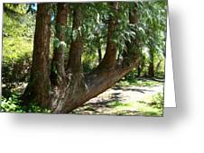 Limbs To Trees Greeting Card by Nick Kloepping